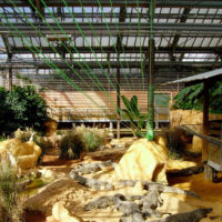 Installations et Expositions - Diagonales Vertes - La Ferme aux Crocodiles - 2006