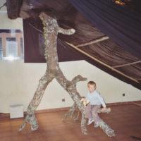 L'arbre aux truffes à l'envers - 2003